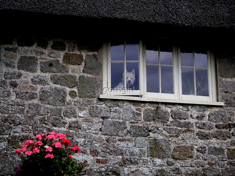 Dog in window of cottage by gothgirl