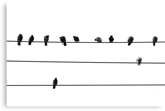 Birds on wire by Elena Elisseeva