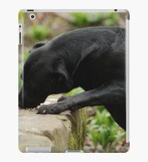 Dog Eating Bird Food iPad Case/Skin