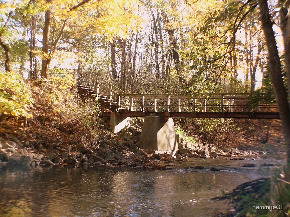 Bridge over Pikes Creek by hammye01