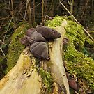 Mushroom and Moss. by Livvy Young