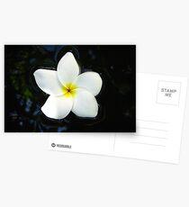 floating flower Postcards