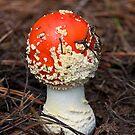 Magic Mushroom by Richard  Windeyer
