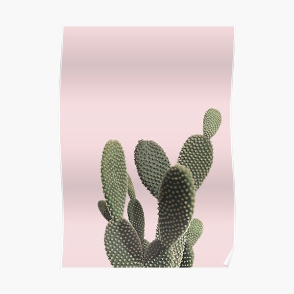 Prickly Cactus Poster