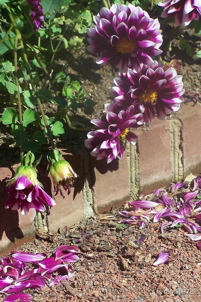 flower petals by randi1972