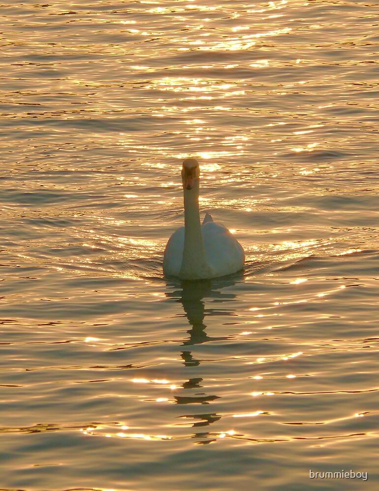 On Golden Pond by brummieboy