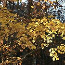 AUTUMN ALONG THE TRAIL by Brenda Planchon