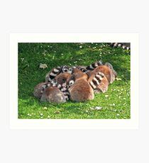 Lemurs Art Print