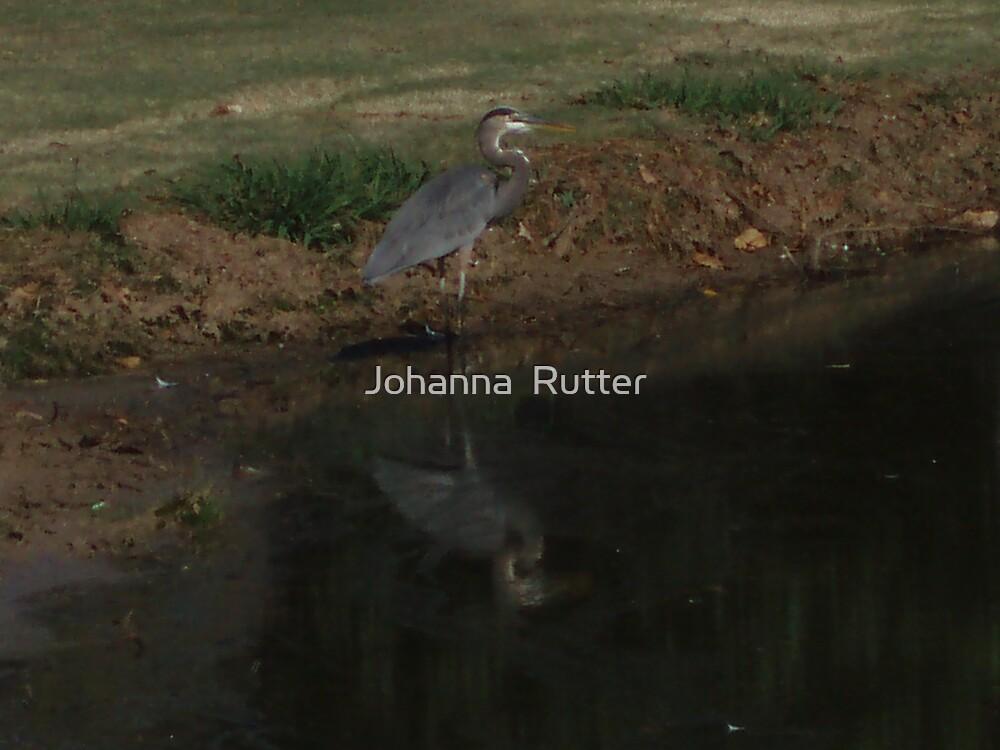 Crane Standing by Johanna  Rutter