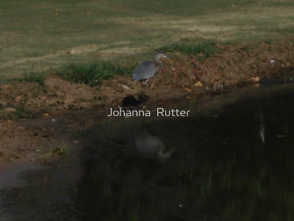 Crane Standing 2 by Johanna  Rutter