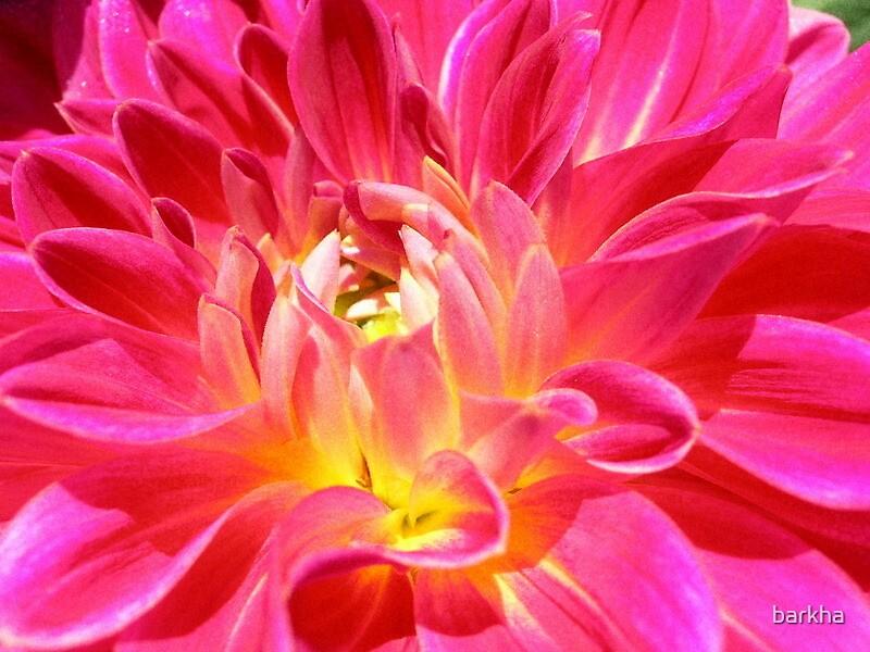 Flower Power by barkha