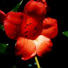 RHODODENDRON SHOWING by EricKyle