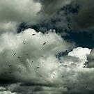 White clouds and Sea Gulls by davrberts