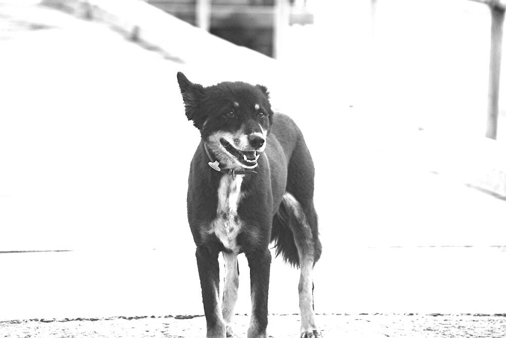 Dog Day by Princessbren2006