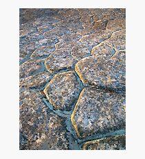 Scales Photographic Print