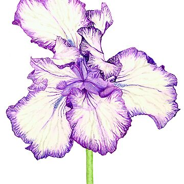 Bearded Iris by neroli