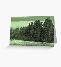 Spruce Trees Greeting Card