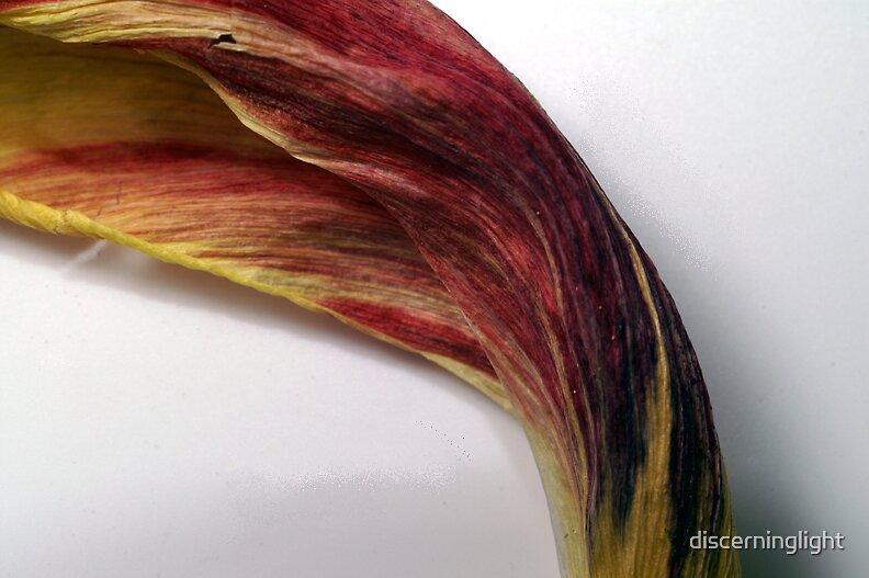 Leaf by discerninglight