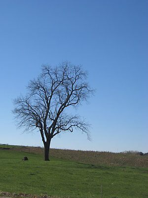 lone tree by emilyransom