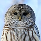 The Eyes of an Angel by Heather King
