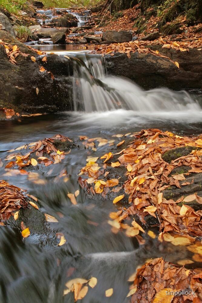 Fall Stream #2 by timpollock