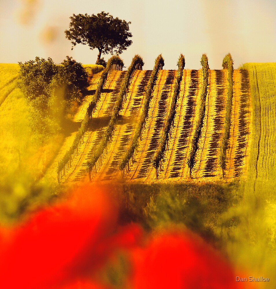 the vineyard on the hill behind the poppy field by Dan Shalloe