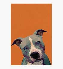 Pitbull Photographic Print