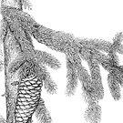 Pine branch study by Sue Abonyi