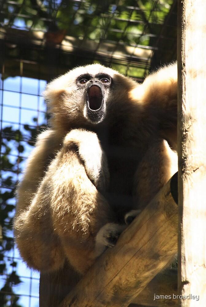 howler monkey by james broadley