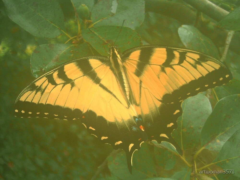 Mist Tiger swallow tail by artwoman3571