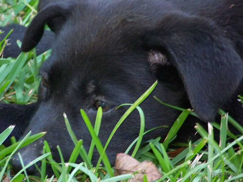 dog tired by flipperflopp