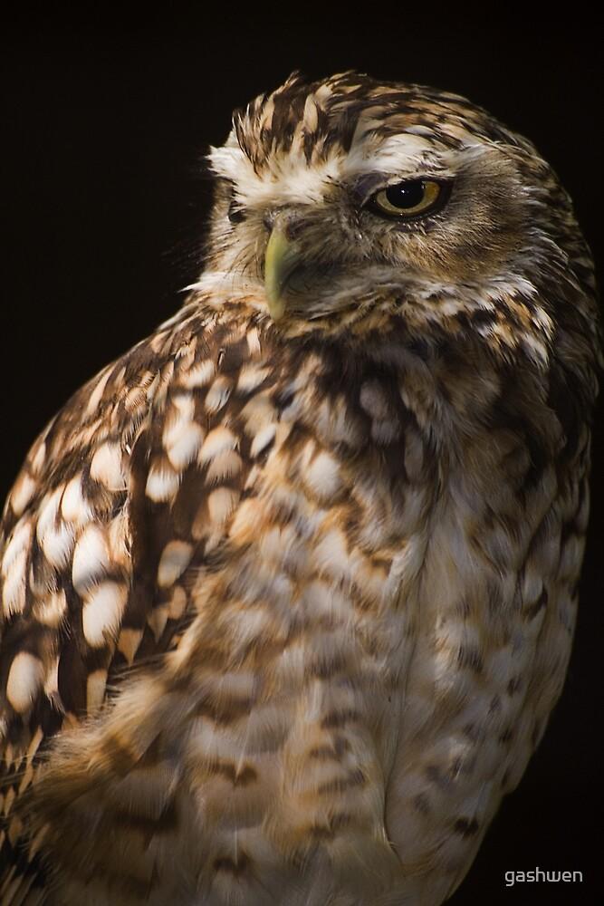 burrowing owl by gashwen