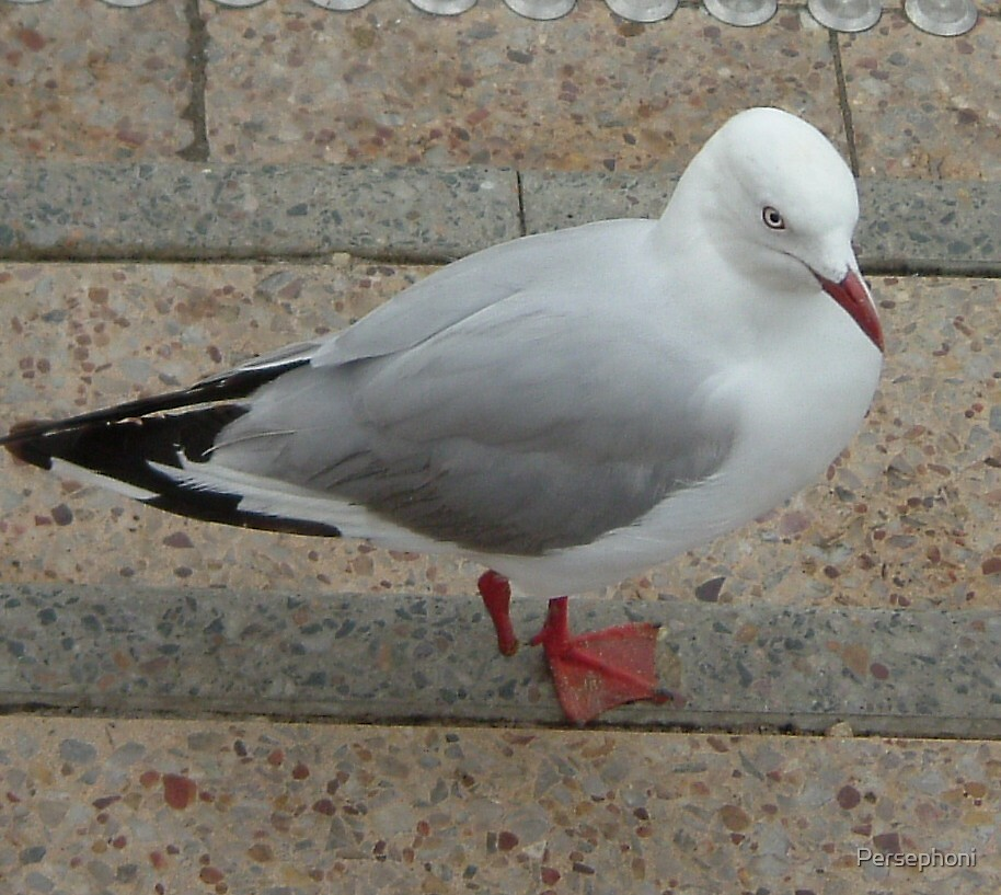 Arrr, me the one legged seagull! by Persephoni