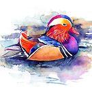 Mandarin duck by Losenko  Mila