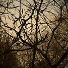 Birds by Scarlet