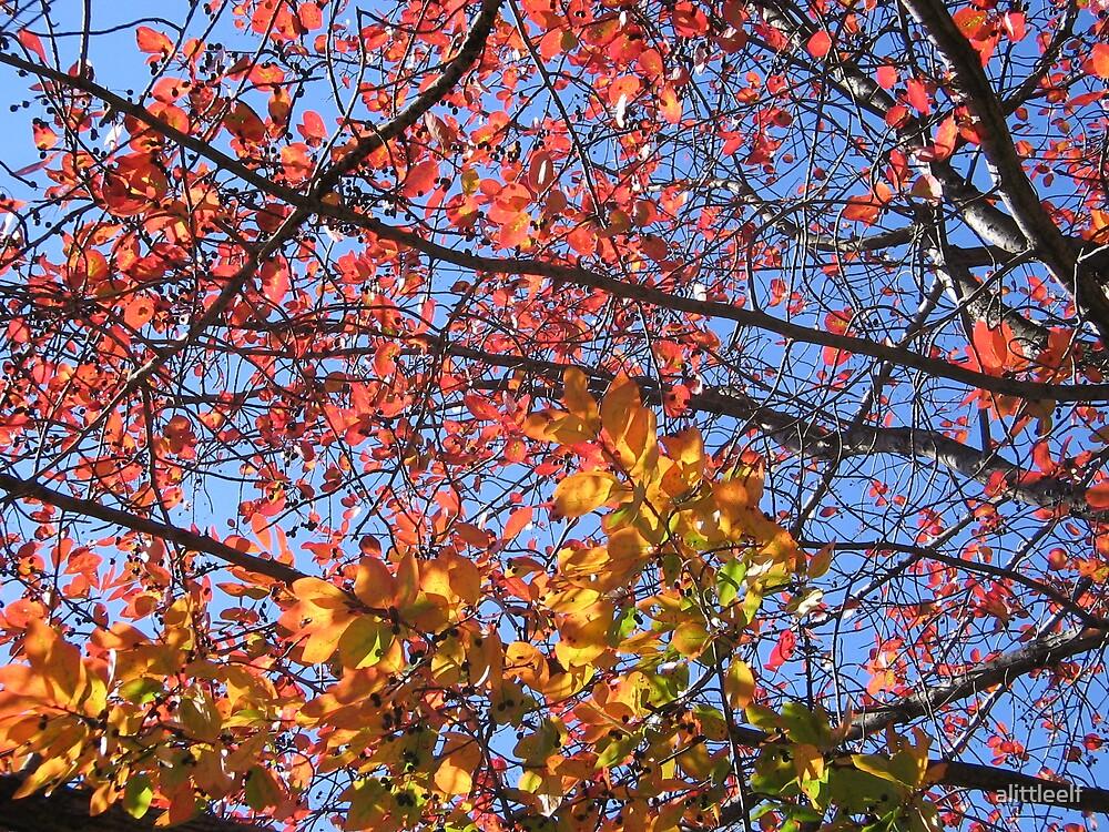 Autumn leaf sunset by alittleelf