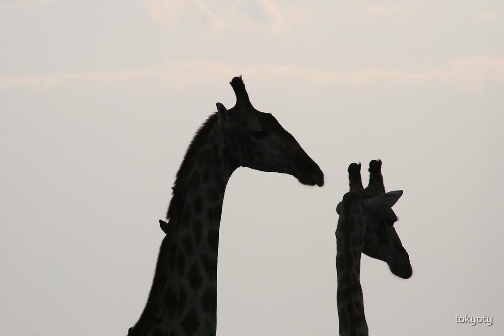 giraffe by tokyoty