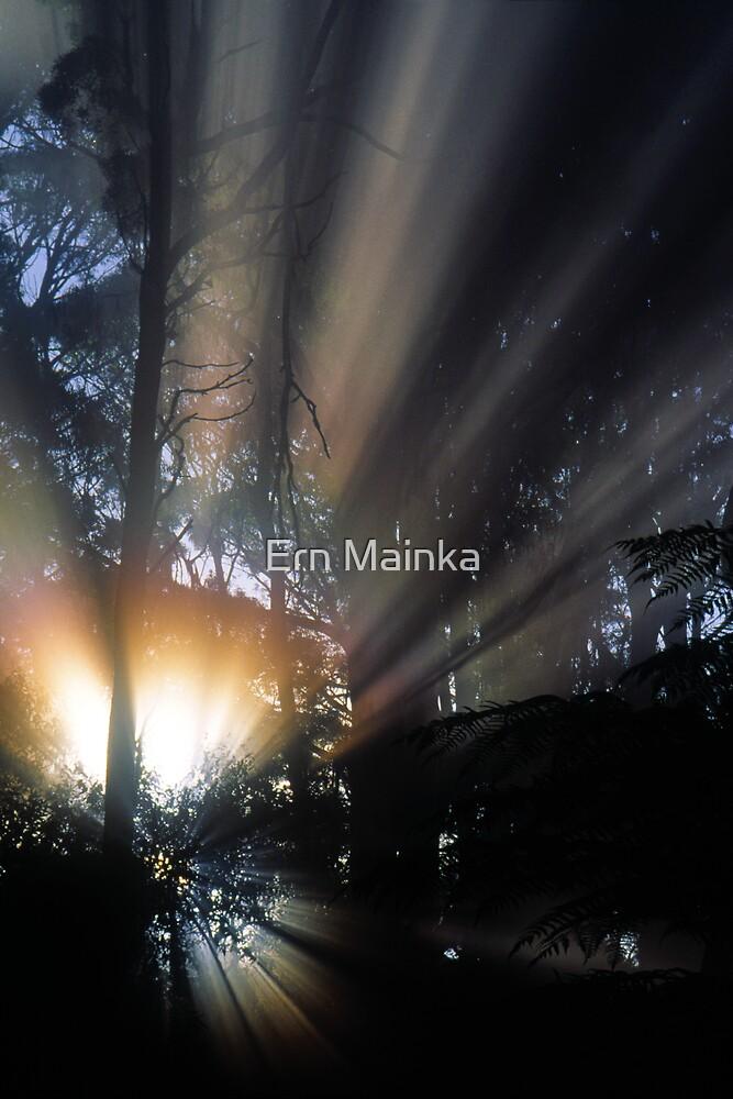 Forest Sunrays III by Ern Mainka