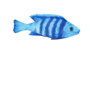 fish 05 cichlids malawi lake  by dai-dai