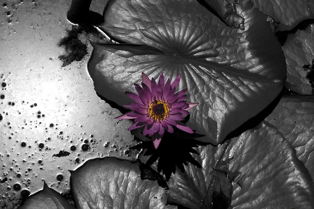 Purple Spot by Raven88