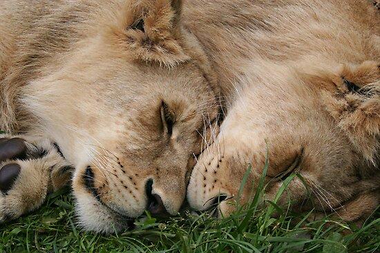 Cub Love by Robyn Carter