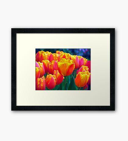 It's Spring Framed Print