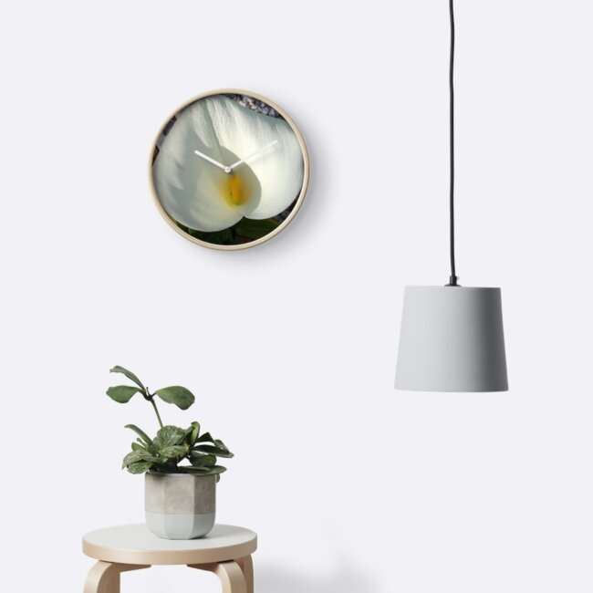 Overhead View of A White Calla Lily Against Pebbles by taiche