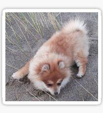 Puppy Fuzzy on the Beach Sticker