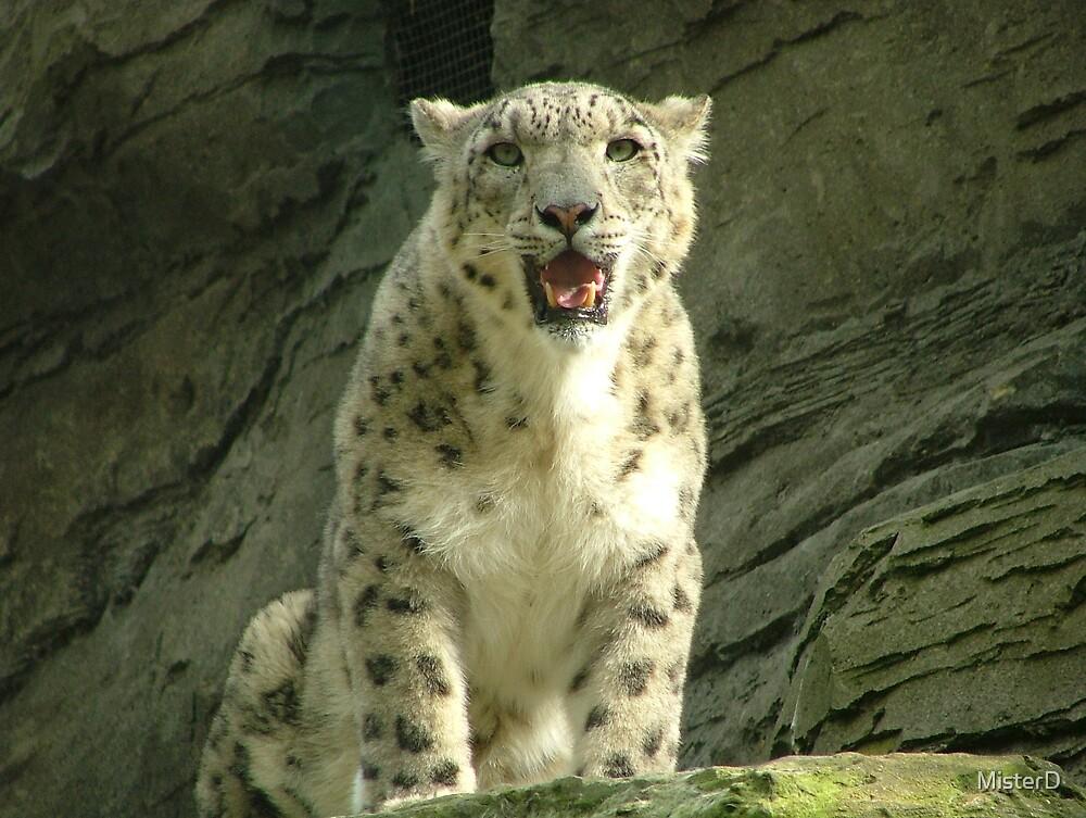 Snow leopard by MisterD