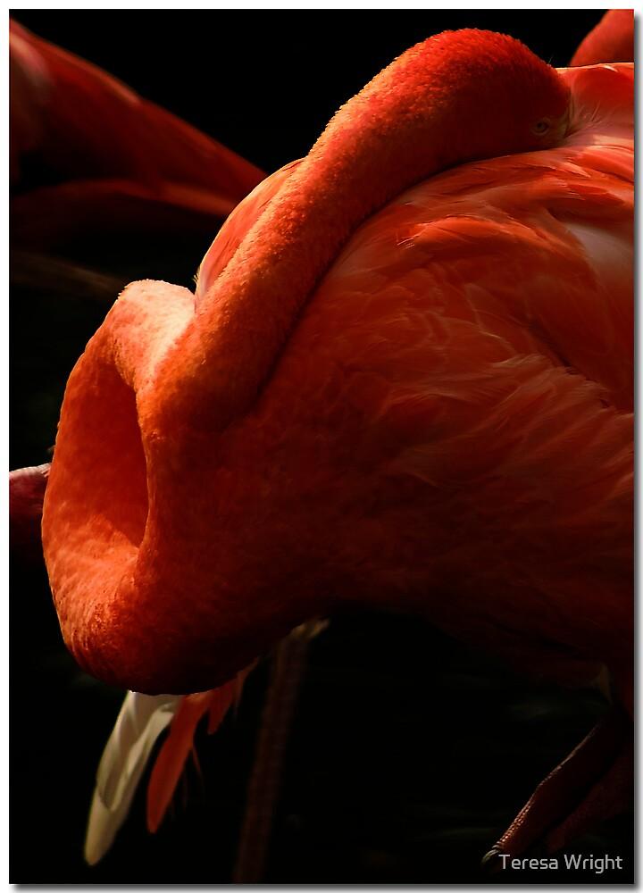 Flamingo by Teresa Wright