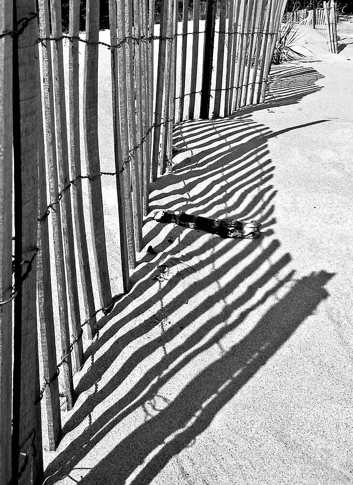Shadows! by Daniela Reynoso Orozco