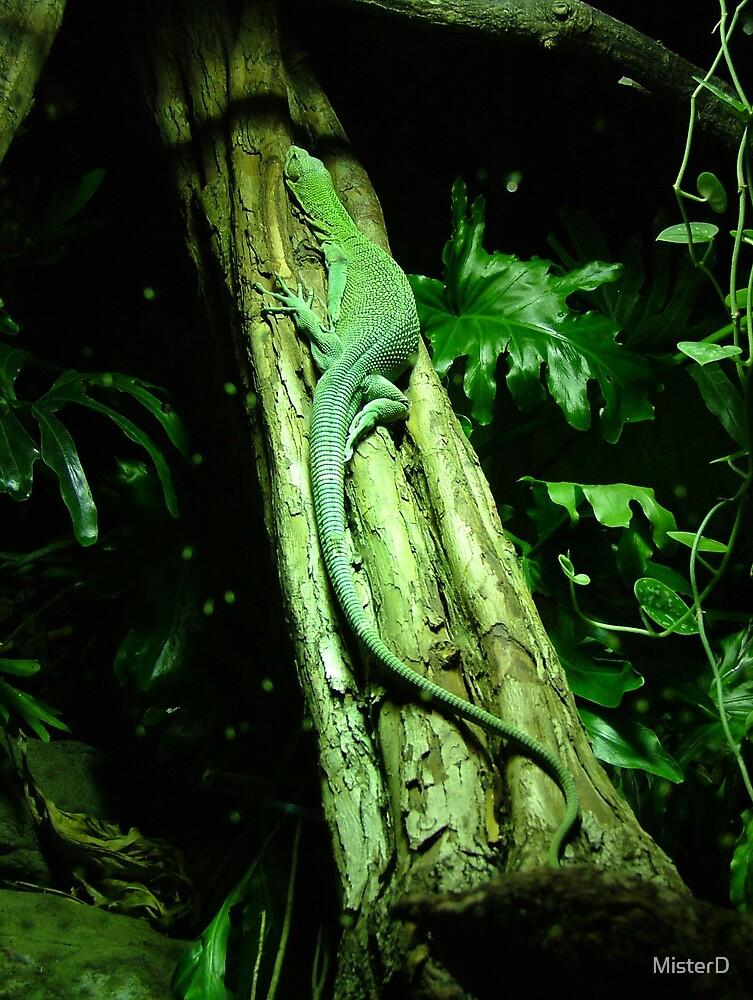 Green tree lizard by MisterD