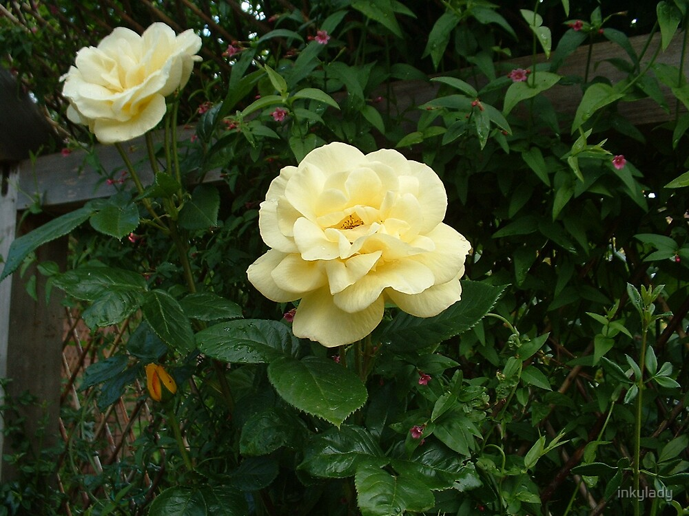 2 yellow roses by inkylady