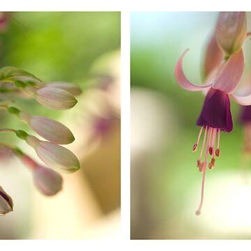Fuchsia by NaturesPixel